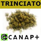 TRINCIATO MILLEFIORI - CANAP+