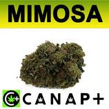 MIMOSA - CANAP+