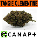 TANGIE CLEMENTINE - CANAP+