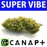 SUPER VIBE - CANAP+