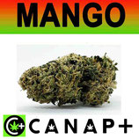 MANGO - CANAP+