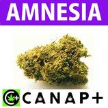 AMNESIA - CANAP+