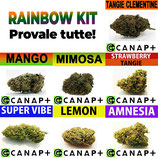 RAINBOW KIT - CANAP+