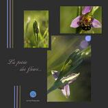 La poésie des fleurs