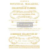 redesign Transferfolie Motiv  -    Flower Collecto