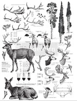 redesign Transferfolie Motiv  -  Deer
