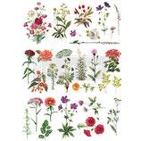 redesign Transferfolie Motiv  -  Floral Collection