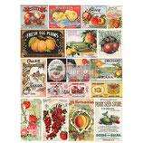 redesign Transferfolie Motiv  -    Vintage Seed