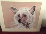 Chinese Crested Prints