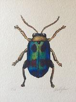 Original Illustration - Beetle Bug