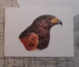 """Grußkarte """"Harris Hawk"""""""