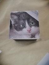 Katze unter Zeitung