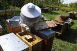 Antrag für ein Bienenvolk im eigenen Garten.