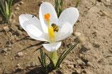 Samen und Blumenzwiebeln mit Anleitung für den eigenen Garten