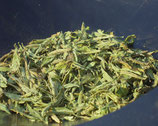 Stevia rebaudiana, geschnitten