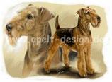 Aeredale Terrier