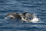 Place enfant - Grands dauphins
