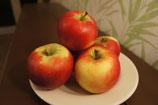 """Äpfel, Sorte """"Gala"""""""