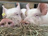 Schweinefleisch Grillpaket