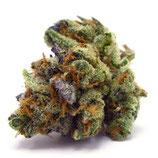CBD Purple Haze (V1)