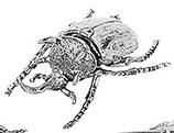 北欧雑貨 昆虫 メタル カブトムシ Beetle ビートル BROSTE COPENHAGEN 14461146-2