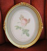 壁掛け ルドゥーテ バラ ピンク 楕円 薔薇  ヴィクトリア ゴールド 金 クラシック 77090PI-B