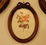 リボンバラピンク 楕円 薔薇 イタリア製 ITALY Dekor Toscana デコール トスカーナ 937002