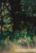 Klappkarte Bambi