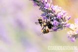 Klappkarte Bienen
