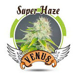 Super Haze (Venus Genetics)