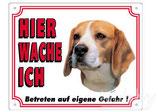 Warntafel Beagle