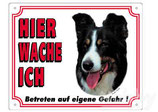 Warntafel Border Collie