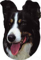Aufkleber Border Collie