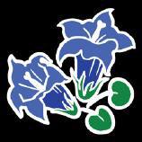 Enzian Blume