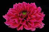 Whispering Flower