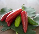 Jalapeno messicano 1 pianta