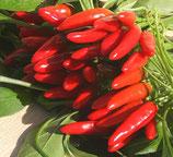 Etna a mazzetti rosso 1 pianta