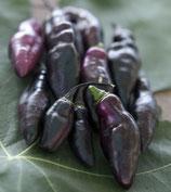 Pimento da Neyde 1 pianta