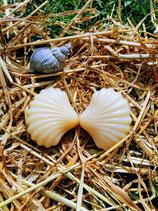 Schafmilchseife Natur Muschel