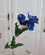 Christrose blau