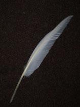 Gänse-Schreibfeder einfach weiß (ALT4317)