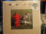 Rush -Signals -Vinyl 200 Gr