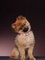 Hundehalsband hellblau