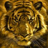 Studie_Tiger! DIV01_Papier.