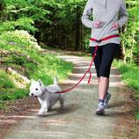 Trixie Bauchgurt mit Leine für kleine und mittelgroße Hunde 12765