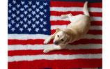 Happybed Amerika