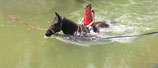 Attraction de parc : Baignade à cheval (3 tours) - Valide avec toute entrée de Grand parc avec spectacles