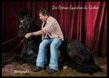Attraction de parc : Magie à cheval (1 photo contre cheval couché) - Valide avec toute entrée de Grand parc avec spectacles