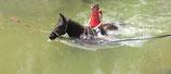 Attraction de parc : Baignade à cheval (2 tours) - Valide avec toute entrée de Grand Parc