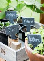Obst, Gemüse, Salate und Kräuter in Töpfen und Kübeln anbauen